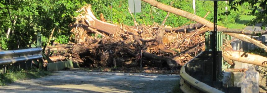 Photo of trees fallen on road